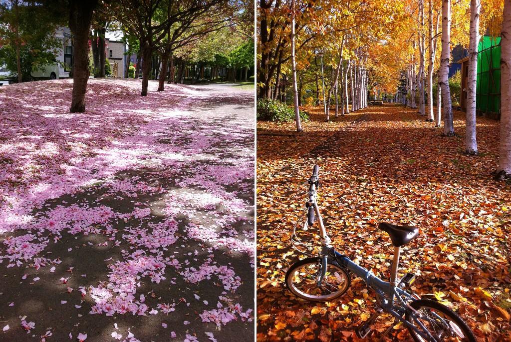 花びらや落ち葉で滑る通勤路